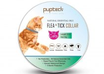 Best Cat and Dog Flea Collars Reviews