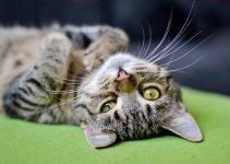 Are Cat Flea Collars Safe